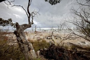 Kow Swamp, near the Victorian town of Gunbower.