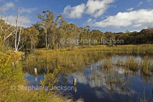 Wetlands in an abandoned reservoir near Emmaville in northern NSW Australia.