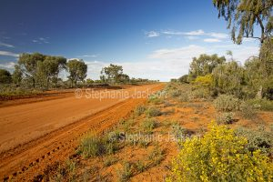Outback road hemmed by resilient vegetation and wildflowers near Wanaaring in NSW Australia.