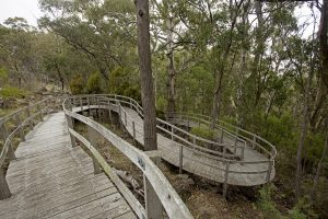 Unique and unusual wooden boardwalk / walkway winding through forest at Mount Kaputar National Park in NSW Australia