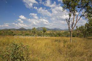 Rural landscape in central Queensland Australia.