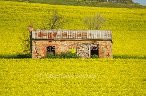 Ruined stone farmhouse / cottage in a field with a crop of flowering canola near Wirrabara in South Australia.