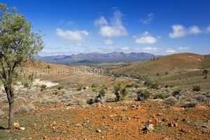 Landscape in the Flinders Ranges National Park in outback South Australia