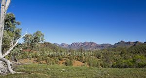 Panoramic view of landscape in the Flinders Ranges National Park in outback South Australia