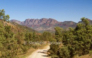 Road / track through woodlands of Flinders Ranges National Park with rocky colourful ranges beyond, in outback / northern South Australia.