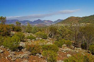 Flinders Ranges National Park in outback / northern South Australia.