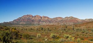 Panoramic view of colourful hills of Flinders Ranges National Park in outback / northern South Australia.