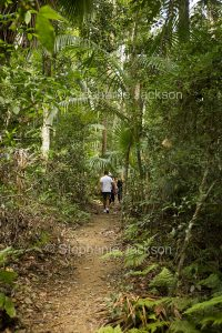 Hikers on walking track through tropical rainforest of Eungalla National Park in Queensland Australia