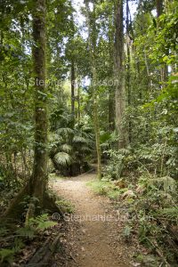 Walking track through tropical rainforest of Eungalla National Park in Queensland Australia