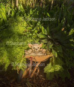 Face of dog with large eyes, concrete garden ornament, peering from among ferns in recycled wheelbarrow in garden in Australia