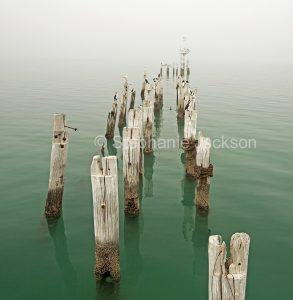 Old posts of ruined jetty in sea of turquoise water with cormorants perched on every post and mist obscuring horizon - in South Australia