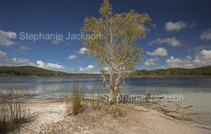 Lake Mackenzie on world heritage listed Fraser Island in Queensland Australia