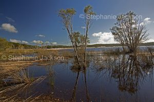 Lake on world heritage listed Fraser Island in Queensland Australia