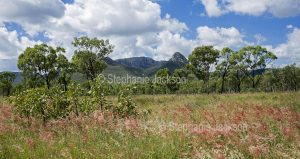 Panoramic landscape of grasses, forest and ranges at Homevale National Park in Queensland Australia