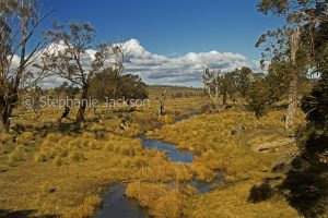 Winter landscape with golden grasses and stream near Jindabyne in the Snowy Mountains region of NSW Australia.