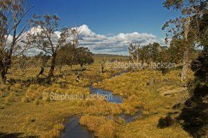 Stream muttering across a winter landscape in western Victoria Australia.