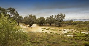 Panoramic view of Australian outback landscape after drought-breaking rain near Walgett in NSW Australia