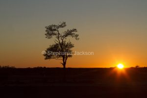 Sunrise with solitary tree on Australian outback plains silhouetted against orange sky near Eromanga in Queensland Australia.