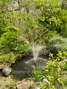 Garden pond / water feature with fountain in Queensland Australia.