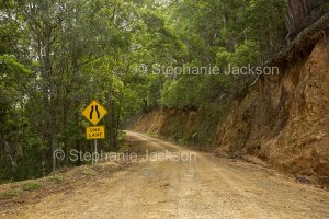Road through forests of Conondale Ranges National Park in Queensland Australia