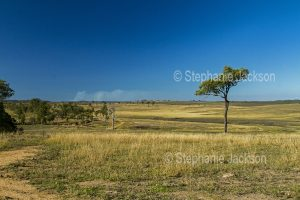 Rural landscape with dry grasses on rolling hills during drought in south-eastern Queensland Australia.