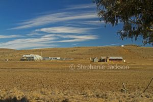 Grazing land, brown landscape devoid of grass during drought, with shearing shed, and stock yards, near Bombala in NSW Australia.