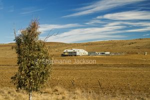 Grazing land, brown landscape devoid of grass during drought, with shearing shed, and stoock yards, near Bombala in NSW Australia.