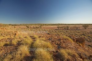 Australian outback landscape with red plains, scattered mulga trees and spinifex grass under blue sky in Bladensburg National Park in Queensland Australia