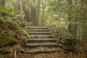 Stone steps through shaded garden on a misty morning in NSW Australia.