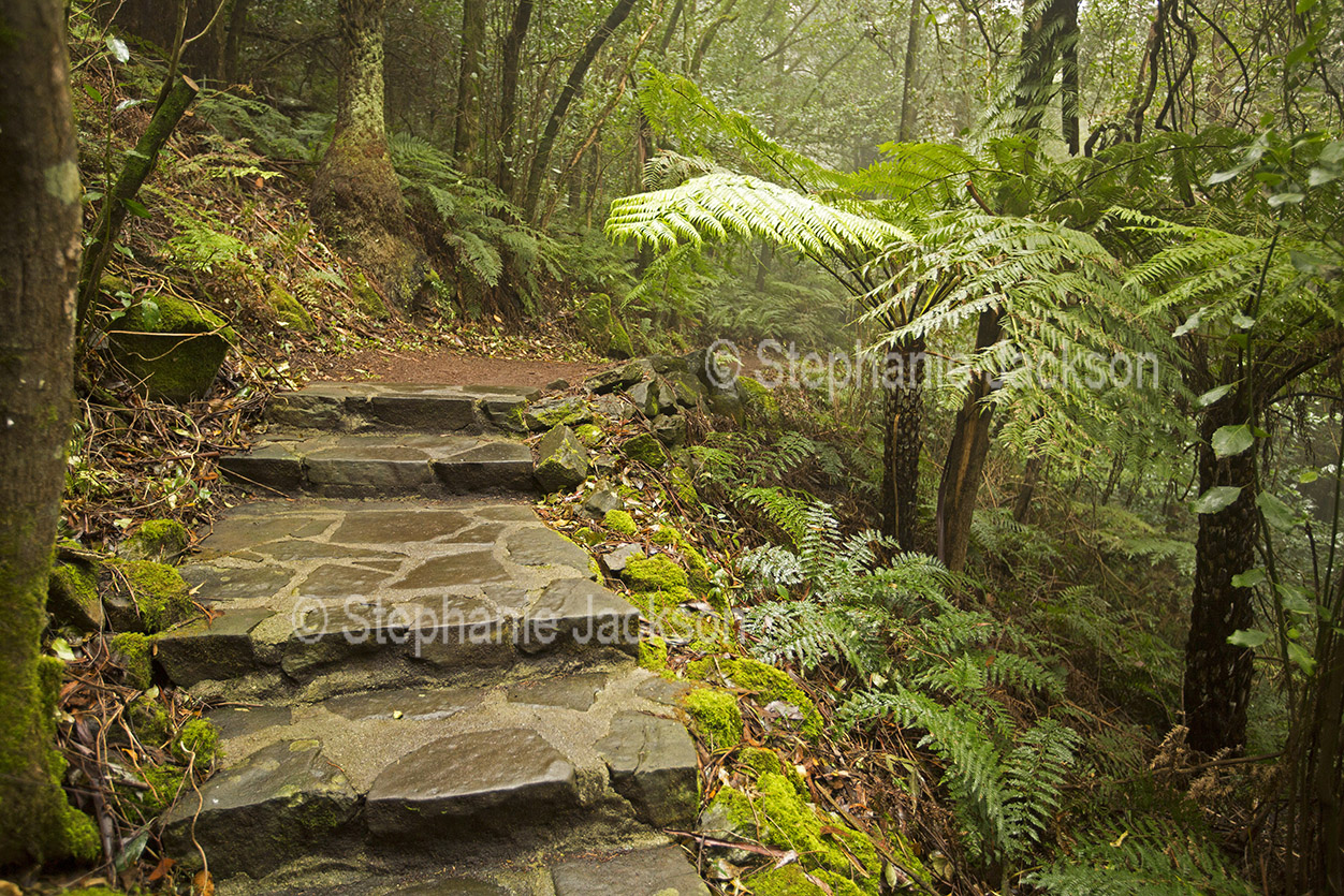 Stone steps through shaded garden in NSW Australia.