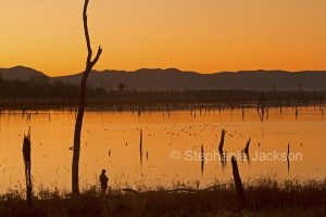 Sunrise with the colourful dawn sky reflected in the tranquil waters of Lake Nuga Nuga in Queensland Australia.