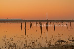 Sunrise with the pink dawn sky reflected in the tranquil waters of Lake Nuga Nuga in Queensland Australia.