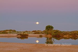 Landscape and full moon at dusk at the Montecollina bore in outback / northern South Australia
