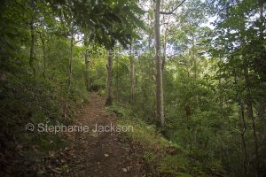 Walking track through forests of Conondale Ranges National Park in Queensland Australia