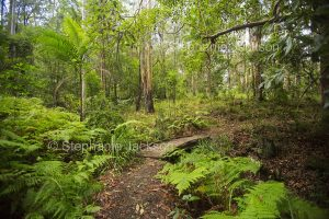 Walking track and bridge through forests in Conondale Ranges National Park in Queensland Australia