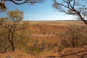 Vast arid landscape with red plains and scattered mulga trees under blue sky in Bladensburg National Park in outback Queensland Australia